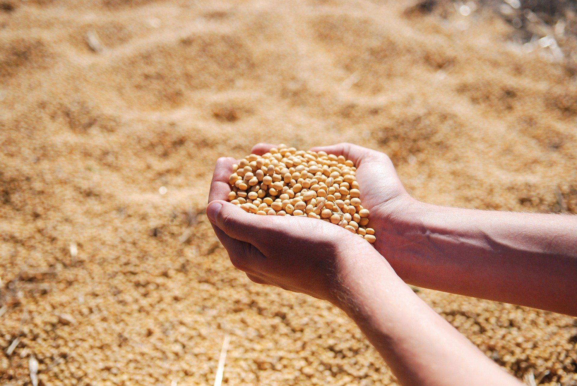 Apesar da crise, Brasil tem aumento de exportação de alimentos