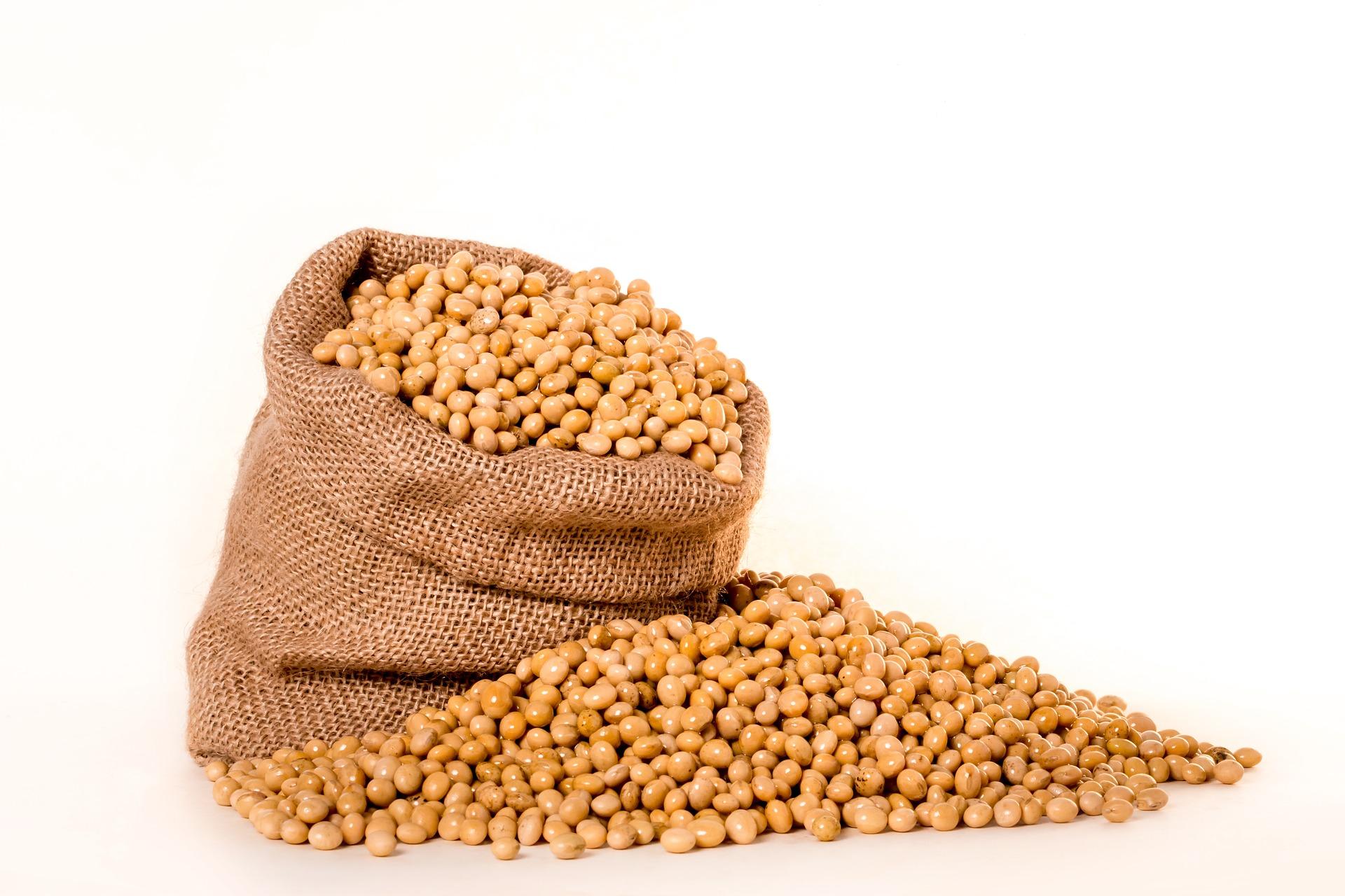 Exportação de soja atinge números expressivos no primeiro semestre