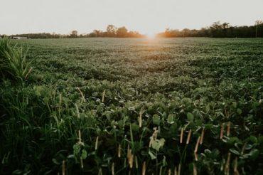 Plantação de soja no Brasil: agronegócio ajudou país a bater recorde em maio