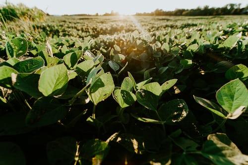 Em meio à quarentena, agronegócio brasileiro bate recorde de exportação