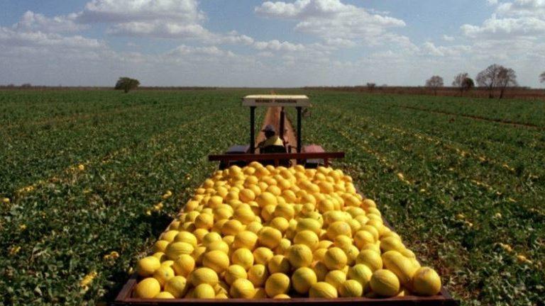 Brasil vende melões para a China. Por que essa é uma grande notícia para quem trabalha com comércio exterior